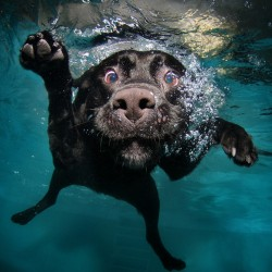 Защо кучетата са страхотни – част 2