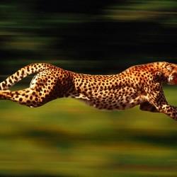 Най-бързите в света