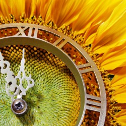 Хронобиология – дни, месеци, сезони  (част 2)