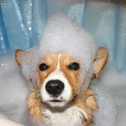 Време за баня…. БАУ!