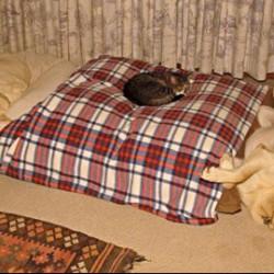 Вечната война между кучета и котки…от малко по-различен ъгъл