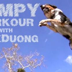 Позитивно за седмицата – Jumpy The Parkour Dog