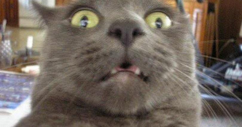 Изненадани котки