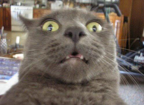 shocked_cat