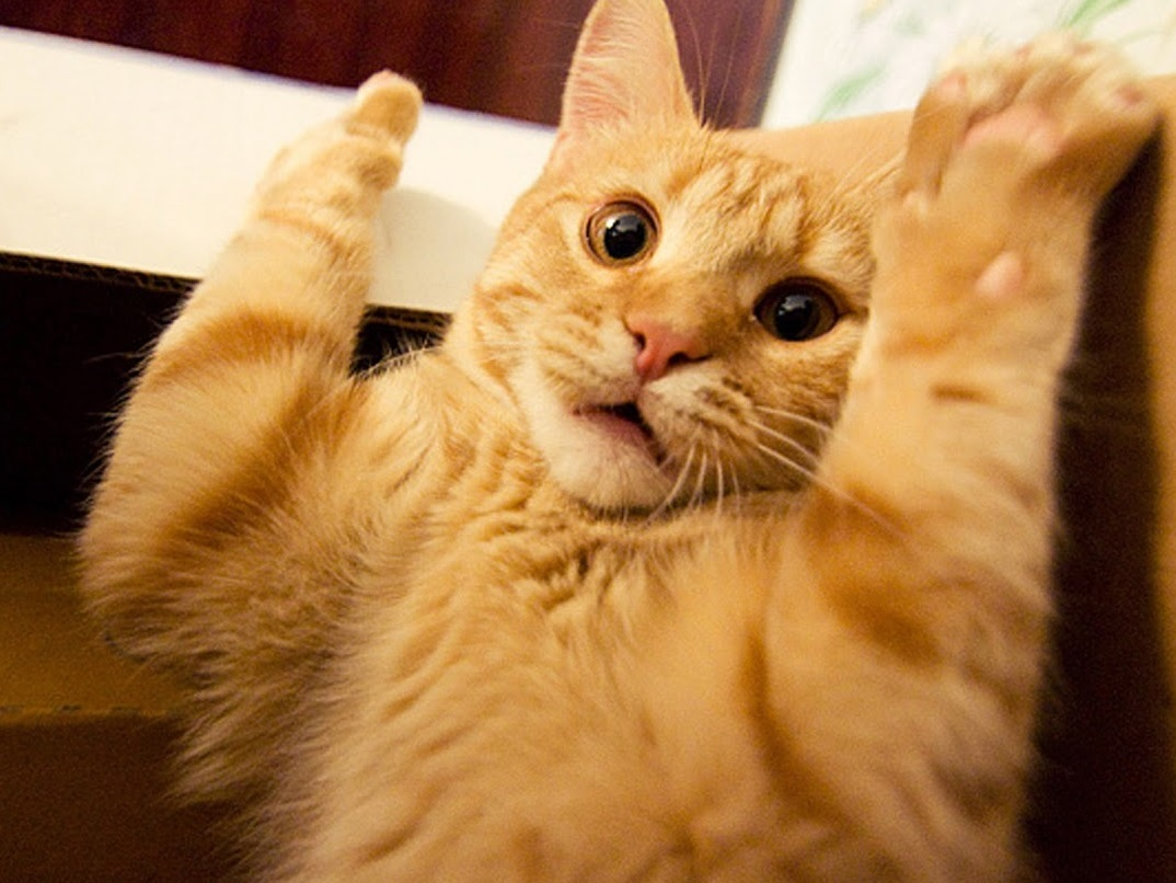 the-world_s-top-10-best-images-of-surprised-cats-6