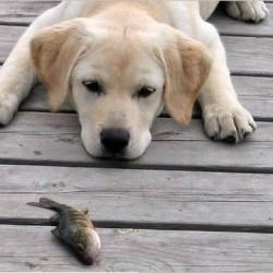 Сърцераздирателно видео на куче, което се опитва да спаси риба