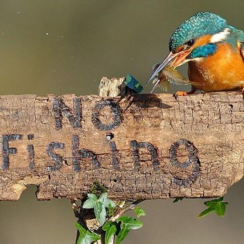 Интересен начин за риболов
