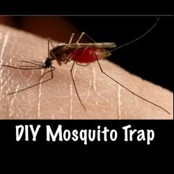 Направи си сам – домашен капан за комари